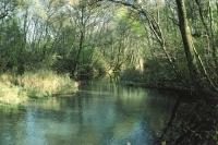 Grundwasseraufstoss bei Sargans SG (Quelle: Herbert Maeder)