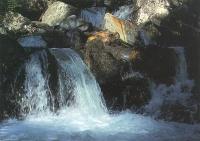 Bach im Val d'Urse Puschlav